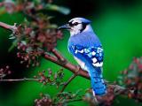 树枝上停歇的小鸟