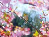 枝头上的小鸟