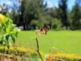 大草原里的蝴蝶