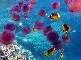 海底生物水母