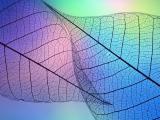 光彩树叶纹理