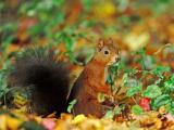 寻找食物的松鼠
