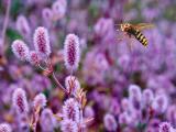 花丛中的可爱小蜜蜂