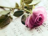 玫瑰花与音符
