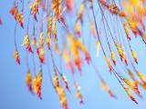 蓝天下的树叶