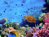 海底里的乌龟