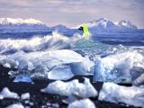 冰海中冲浪