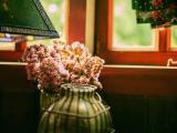 窗台边的插花