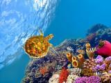海底的乌龟