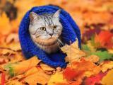 怕冷的灰猫