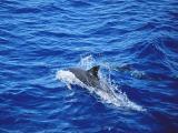 形影单只的海豚