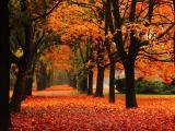 秋天的林荫大道
