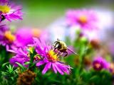 美丽花卉上的蜜蜂