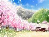樱花飘落时