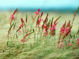 杂草丛中的花卉