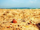 沙滩上的橙色贝壳