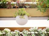 花房里的盆栽