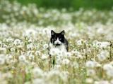 蒲公英中的猫咪