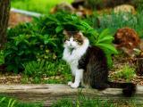 绿色眼睛的猫
