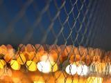 铁丝网上的霓虹