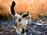 阳光下的可爱小猫