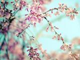 灿烂的花朵