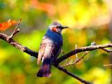 树枝上停歇的鸟