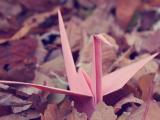 承载梦想的纸鹤