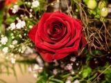 象征爱情的红玫瑰
