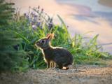 迷路的小兔子