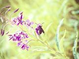紫色花卉上的昆虫