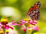 花朵上的美丽蝴蝶