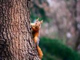 树上的松鼠