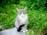 萌萌哒猫咪