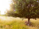 树下的自行车