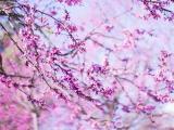 紫色唯美花卉
