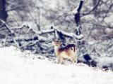雪地里的小鹿