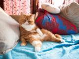 搞笑加菲猫
