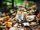落叶丛中的猫咪