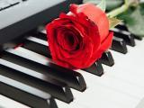 钢琴与玫瑰