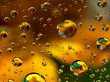 晶莹的水泡