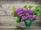 紫色丁香插花