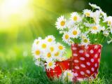 白菊花插花