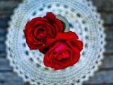红玫瑰插花