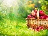 篮子里的苹果
