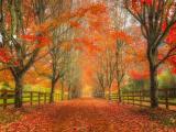 深秋的美景