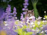 花丛中的猫头鹰