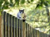 栅栏上的猫咪